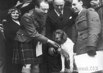 Невероятные истории о героических собаках на войне