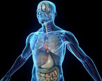 10 любопытных фактов о нашем теле, которые вы наверняка не знали