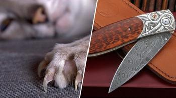 10 технологий, которые мы позаимствовали у животных