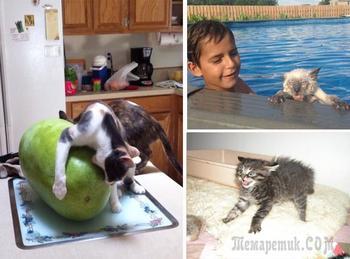 Веселые фотографии с животными