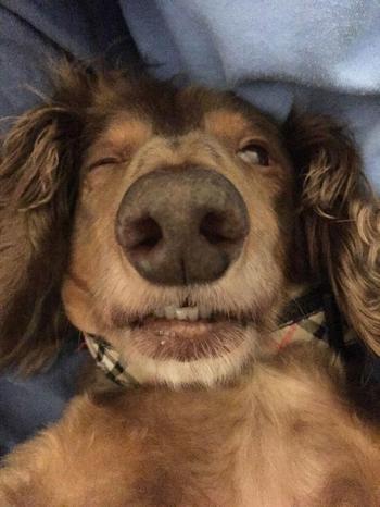 Собаки после наркоза, чьи забавные морды рассмешат вас до слёз