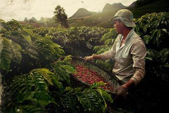 Кофейные плантации в Бразилии: фото прогулка