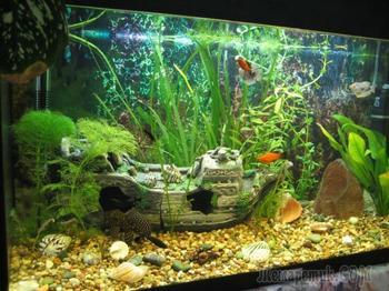 Оформляем аквариум своими руками