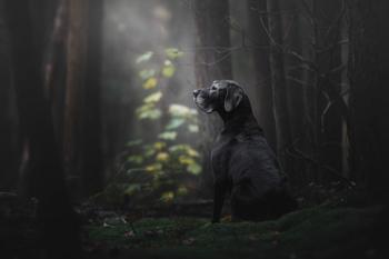 Фотогеничность на уровне «бог»: в Англии выбрали самых красивых и эмоциональных собак