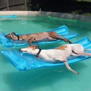 Несколько забавных фотографий о том, как круто животные проводят знойное лето