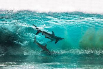 Финалисты морского конкурса Ocean Photography Awards 2020