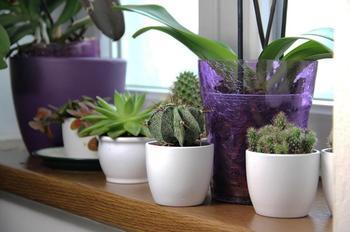Озеленяем дом — 10 лучших растений для жизни в гармонии