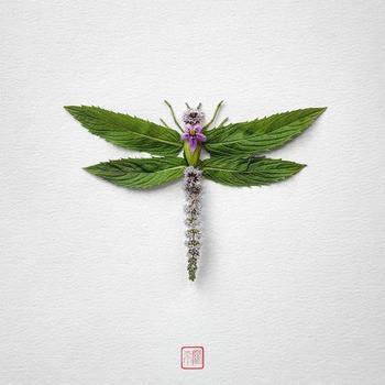 Насекомые, созданные из цветов от художника Раку Иноуэ