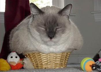 Милейшие котики принимающие любую форму