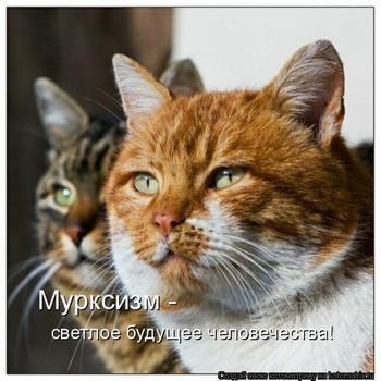 Свежая котоматрица