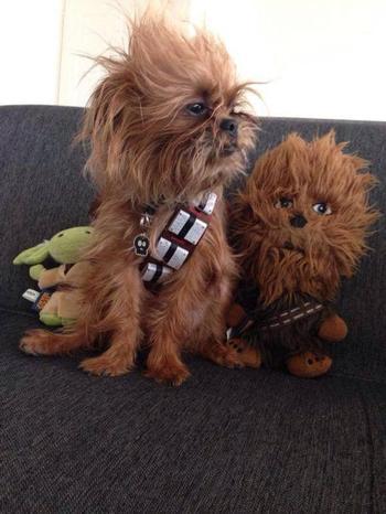 Животные, которые нашли своих двойников среди мягких игрушек
