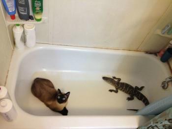 Эти коты сами нашли себе хозяев