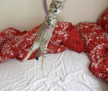 Смешные и просто красивые фотографии кошек