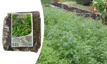 Вика в качестве сидерата для улучшения плодородия почвы: когда сеять и срезать