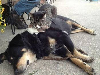 Забавные котики заснувшие в неожиданных местах