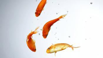 Сможете ли вы отгадать эту запутанную загадку про рыбок?