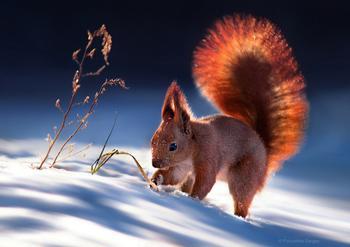 15 ярких фотографий о том, как зимуют животные