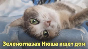 Трехцветная кошка с изумрудными глазами ищет дом!