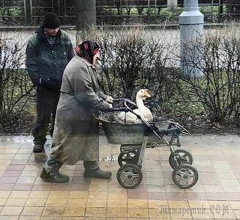 Картины русской жизни с ее национальными особенностями