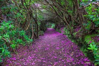 28 магических дорожек, по которым Вам непременно захочется прогуляться