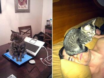 В каждом коте живет маленький дьявол