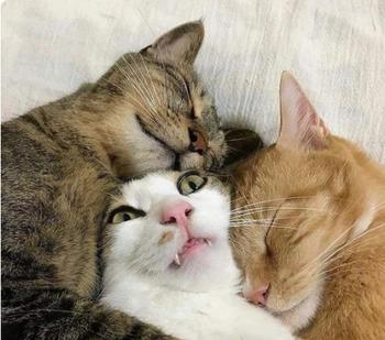 Доказательства того, что в каждой кошке живет гениальный актер