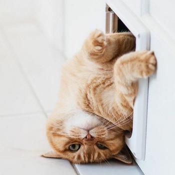 16 котов, которые плевать хотели на это ваше общественное мнение