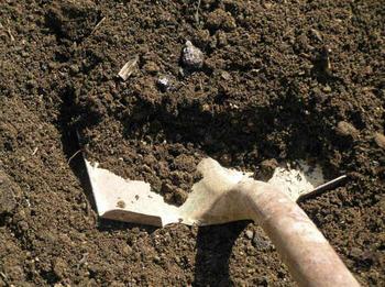 Как вывести муравьев с участка при помощи гуманных методов