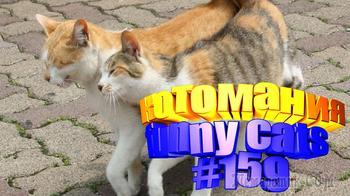 Смешные коты | Приколы с котами | Видео про котов | Котомания # 159
