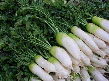 Турнепс — что это за овощ и как его можно вырастить