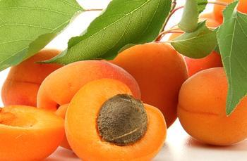 Лучшие сорта абрикосов