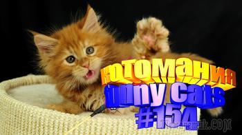 Смешные коты | Приколы с котами | Видео про котов | Котомания # 154