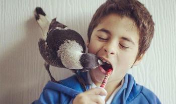 Пингвин — умная домашняя сорока, которая любит поваляться в постели и помогает детям чистить зубы