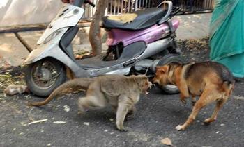 Обезьяна усыновила щенка и заботится о нём, как о собственном детёныше
