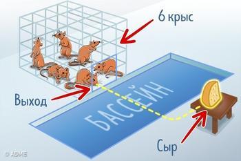 Удивительный эксперимент на крысах, который наглядно показал, как ведут себя люди