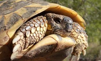 Черепахи на грани бессмертия, как долго они живут