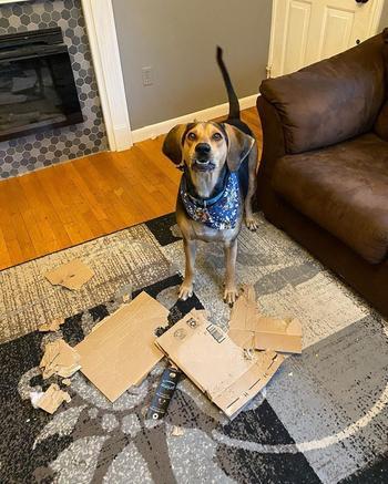 Собака бессовестно фотобомбит все рождественские фото семьи