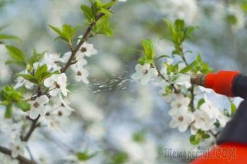 Ситуация: что делать, если обещают заморозки, а деревья и кусты уже вовсю цветут