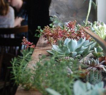 Капризные домашние цветы и правила ухода за ними