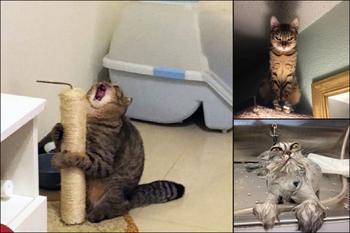 """""""Оскар"""" в студию! 15 фото котиков, которые все слишком драматизируют"""