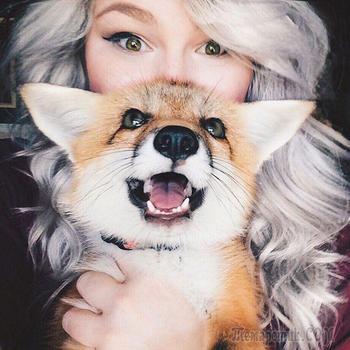 Juniper — домашняя лисица, хозяйка которой отговаривает всех желающих завести лису