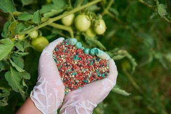 Чем подкормить огород в июле