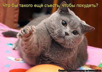 История про большого кота, который сидел на диете