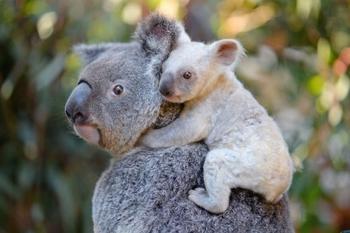 Потрясающие фотографии дикой природы Роберта Ирвина