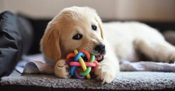 Китайский игровой автомат с живыми щенками вызвал гнев пользователей соцсетей