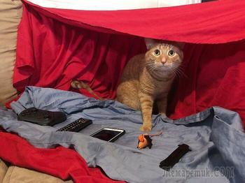 19 кошек, которые так хорошо устроились, что кажется, будто это они хозяева людей