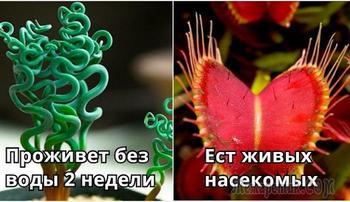 17 комнатных растений, которые не каждый рискнет поставить к себе на подоконник