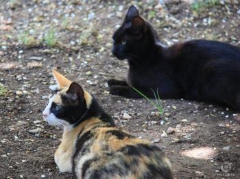 Почему кошки так холодны с хозяевами