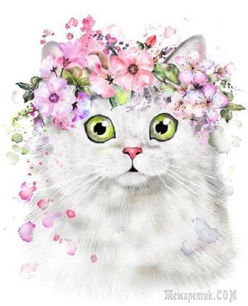 Миленький котик:)