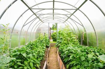 Как ухаживать за растениями в теплице